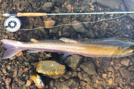 7月の北海道、15分のイトウ釣行、刺激的でした。